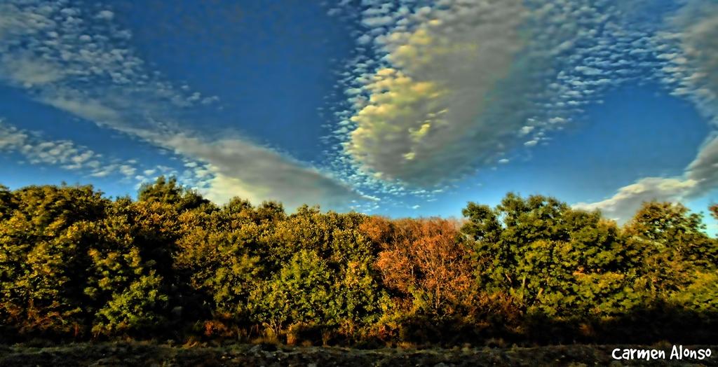 Nubes y árboles