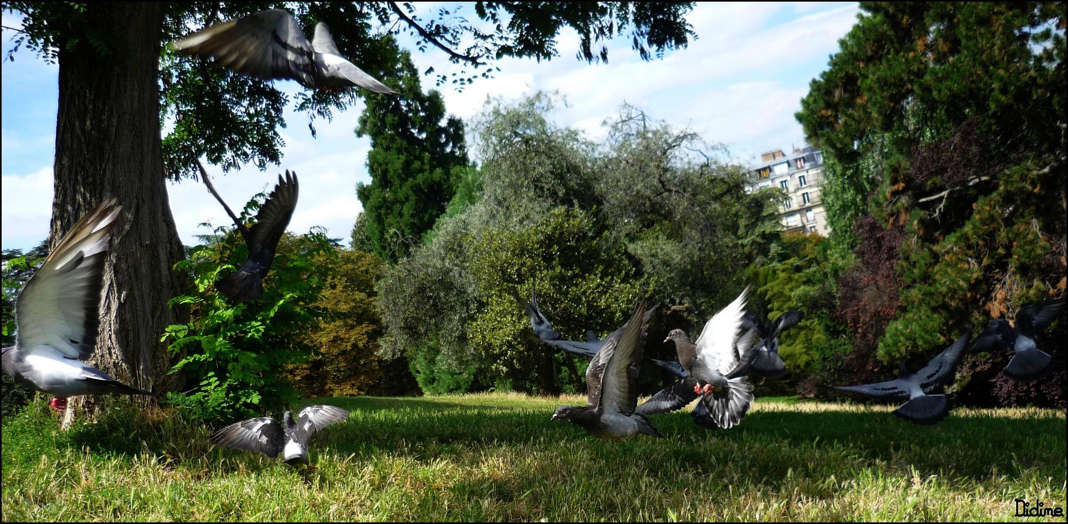 Nuée de Pigeons!