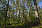 Nürnberger Reichswald