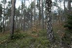 Nürnberger Reichswald, April 2012, Bild3