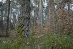 Nürnberger Reichswald im April, Bild2
