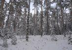 Nürnberger Reichswald im Winter