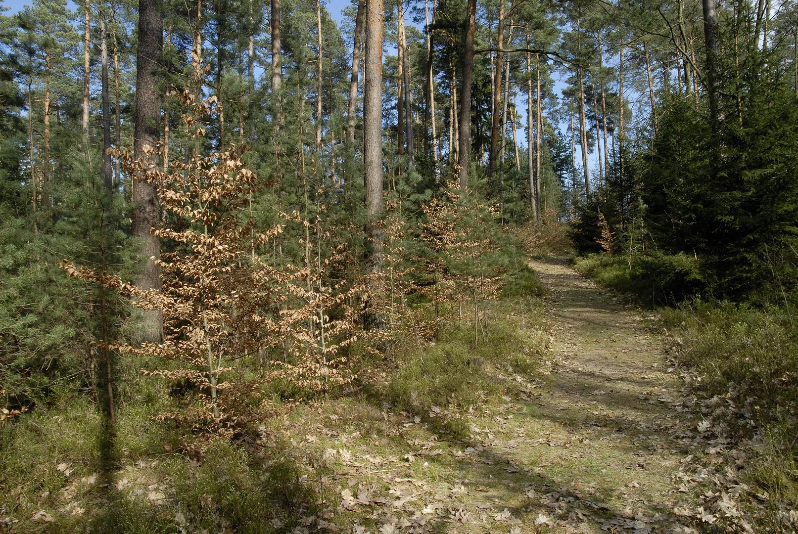 Nürnberger Reichswald, Waldweg im April