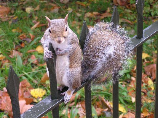 Nüsse für mich? Gerne!