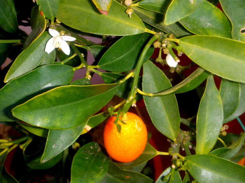 Nuevos frutos