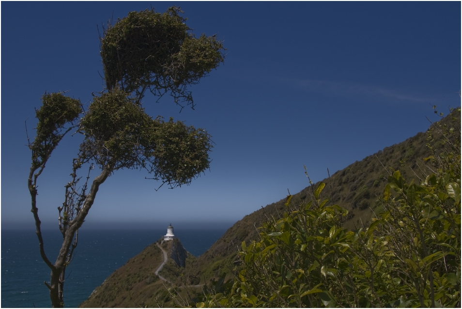 Nugget Point (2)