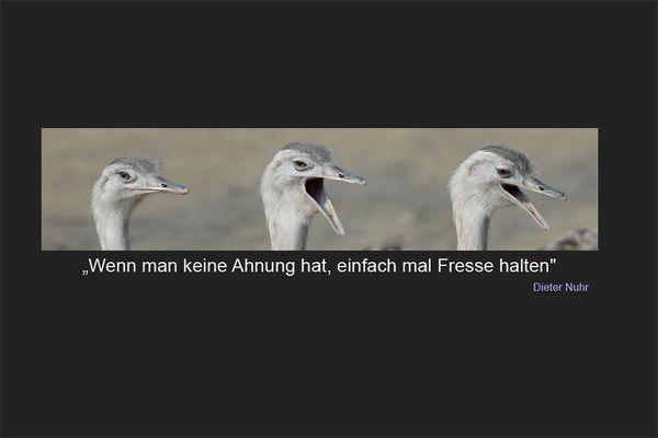 """""""Nuhr"""""""