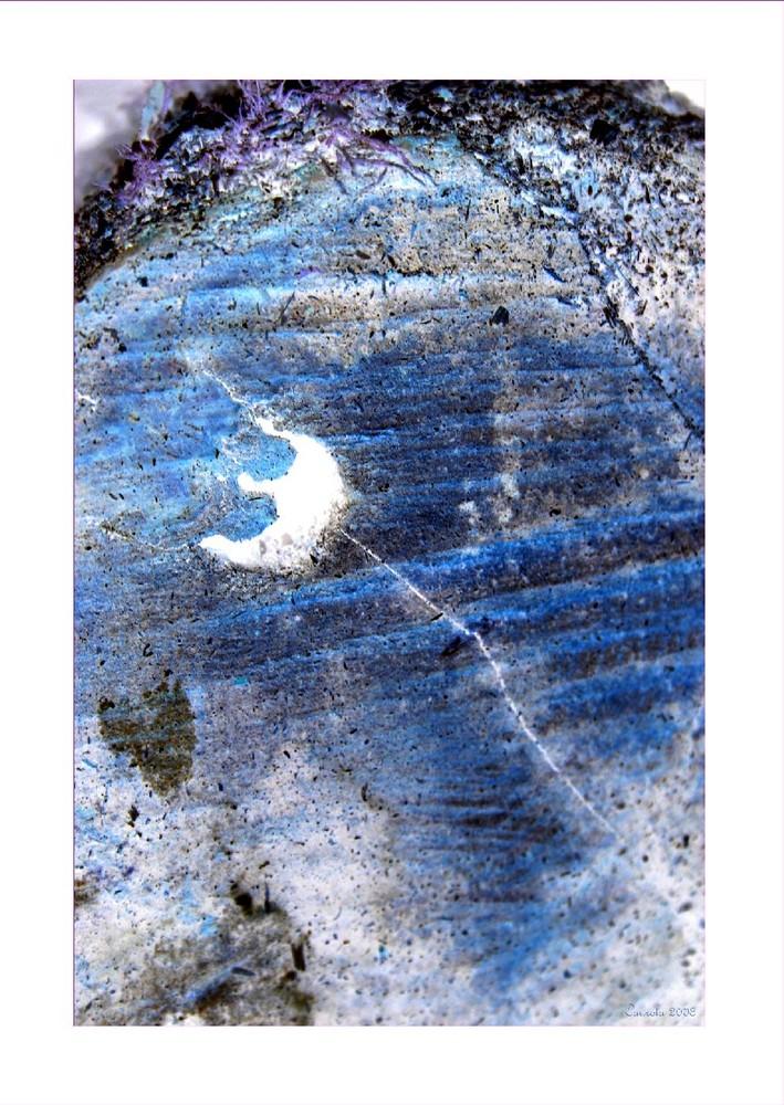 Nuit bleue au clair de lune