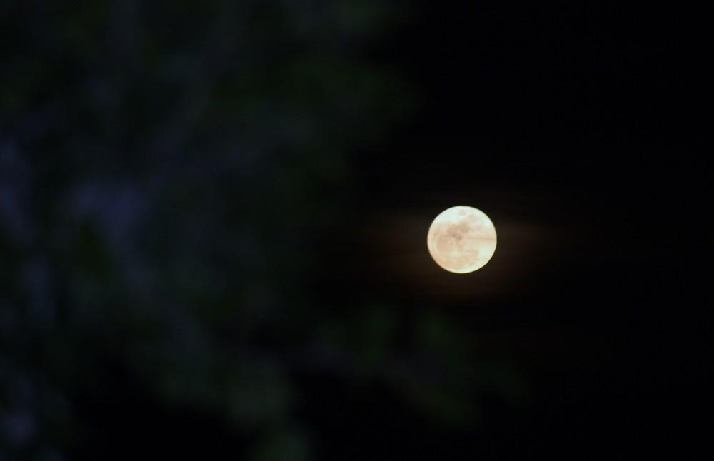 Nuit de loup garou