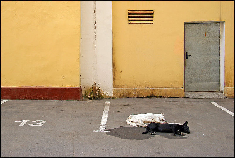 Numerology of dogs life