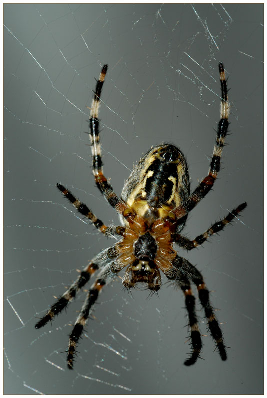 ... nun die Spinne etwas größer ....