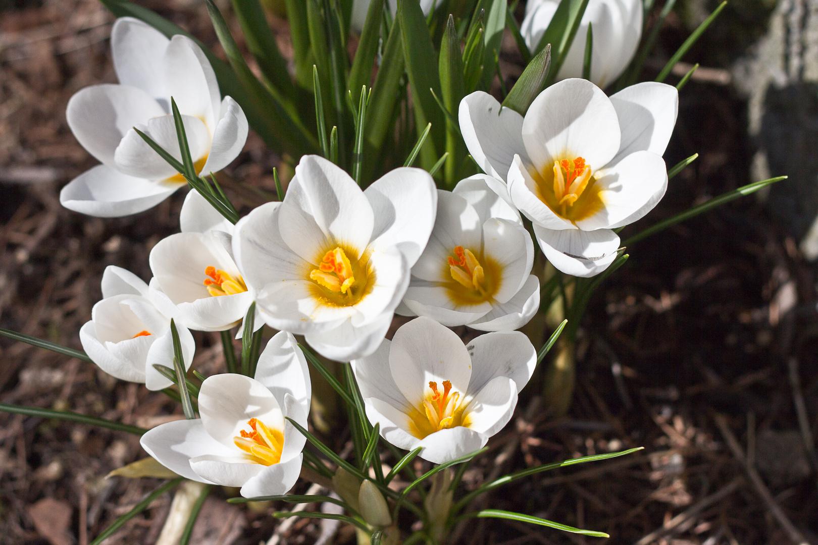 Nun ist er da, der Frühling 2