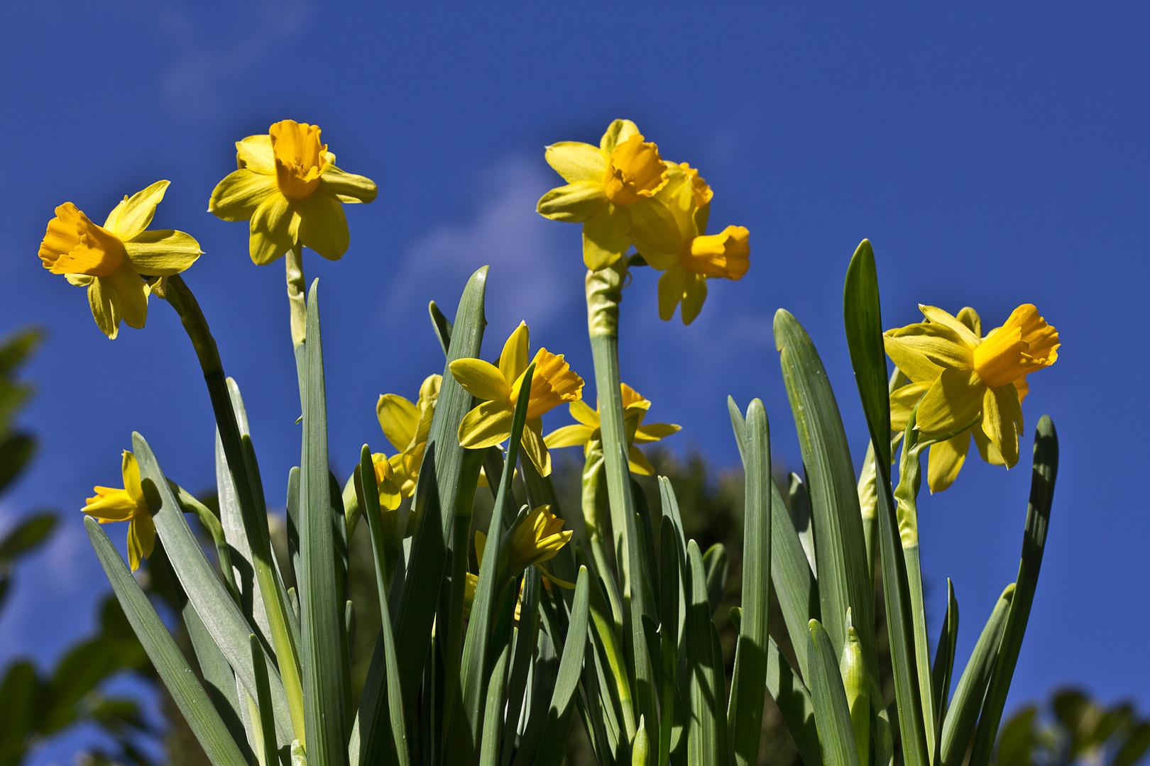 Nun ist er da, der Frühling 3
