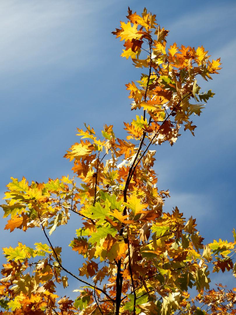 Nun ist es Herbst