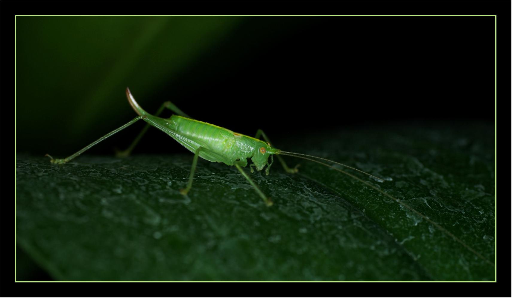Nur 10 mm grün