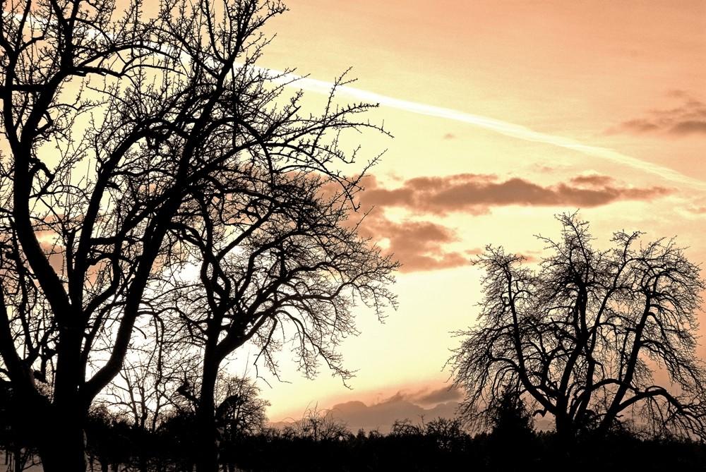 Nur Bäume - Just trees