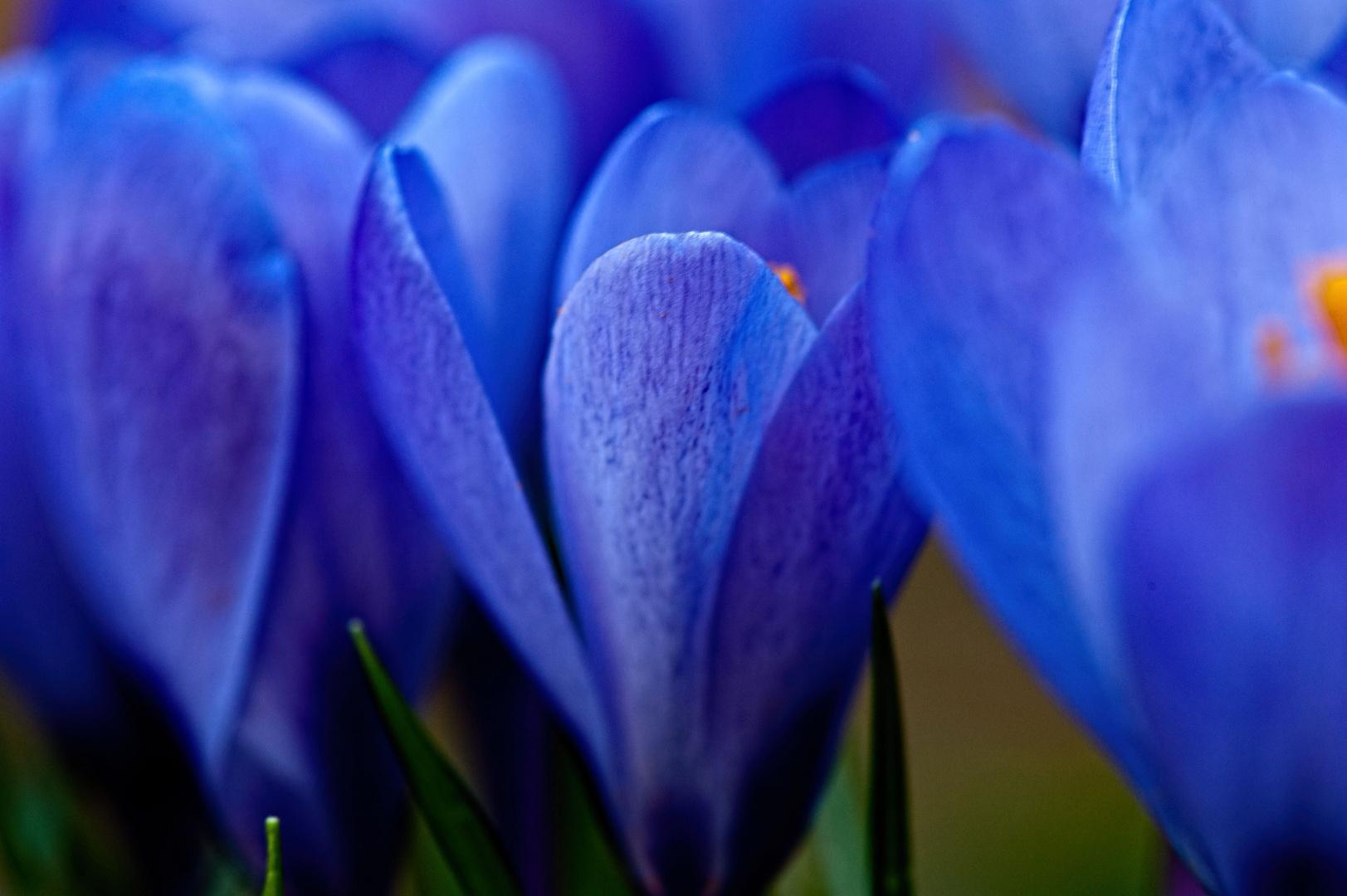 nur blau.....