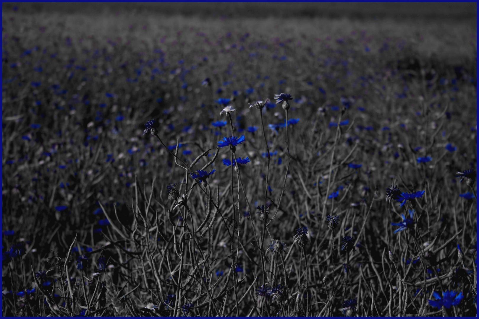 """""""nur Blau"""""""