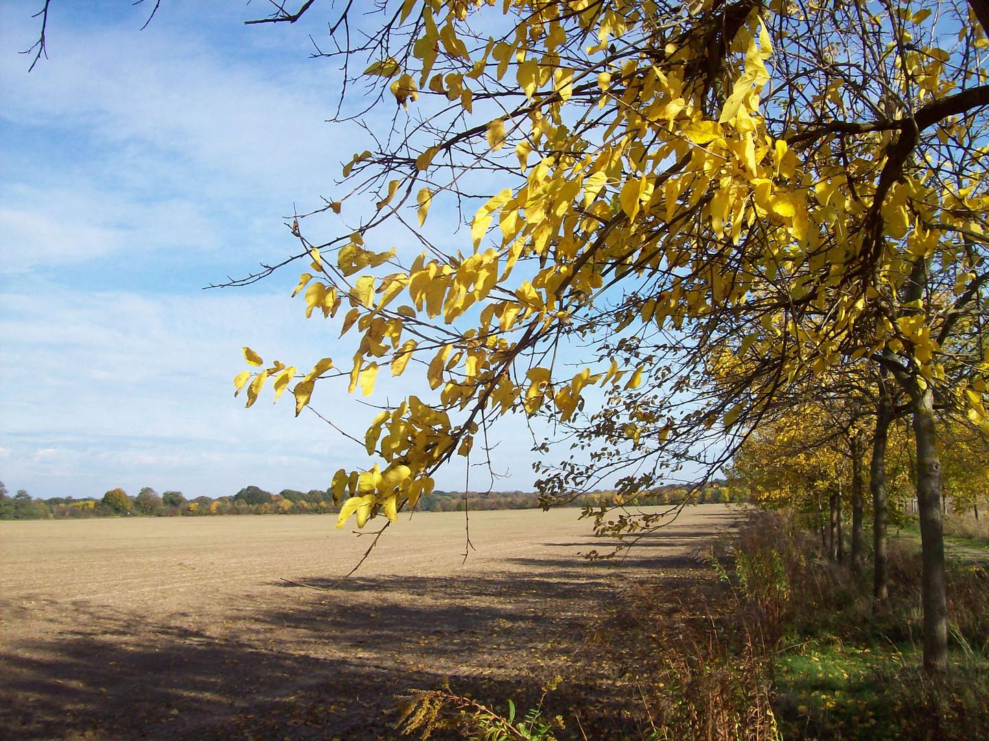Nur der Herbst mal so bunt