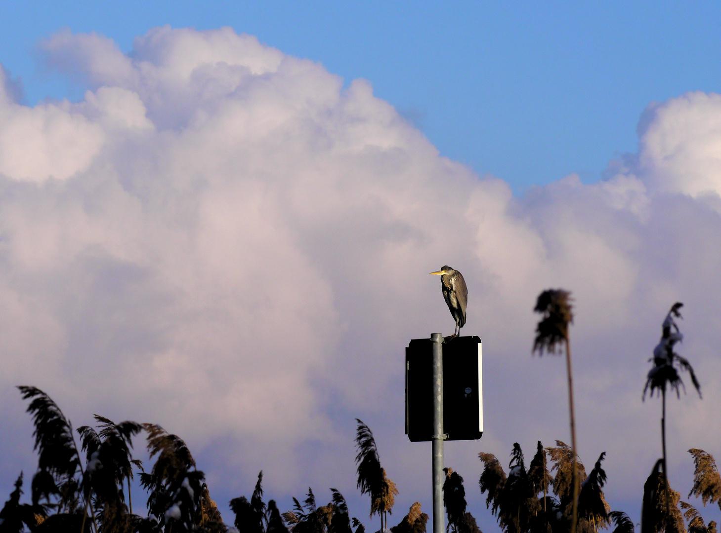 Nur der Himmel ist höher...
