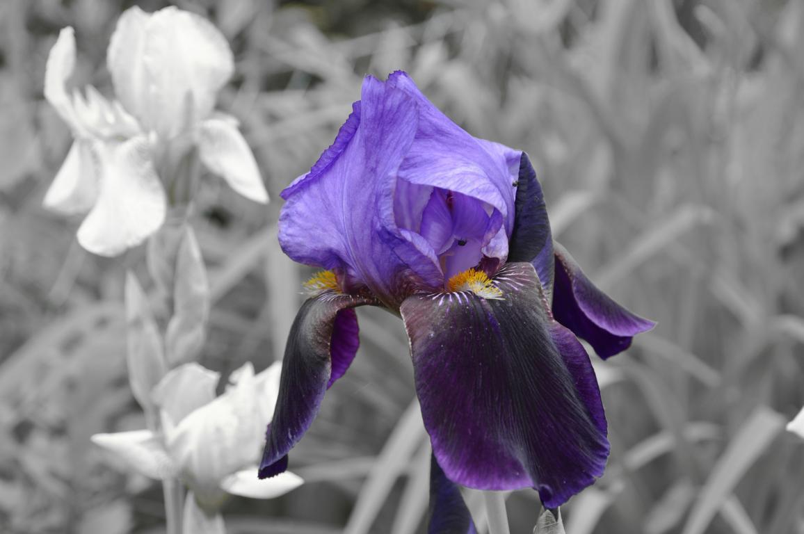Nur die Schönheit der Blüte