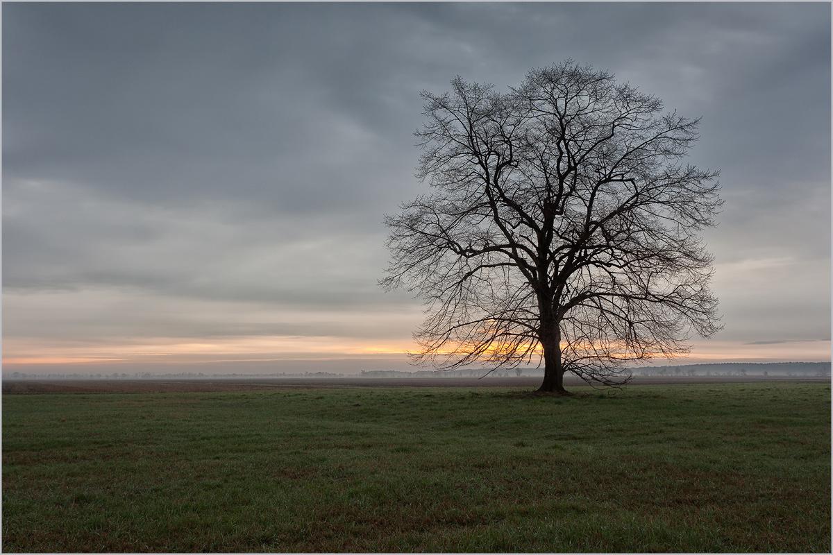 nur ein Baum...
