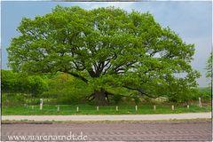 Nur ein Baum (5)