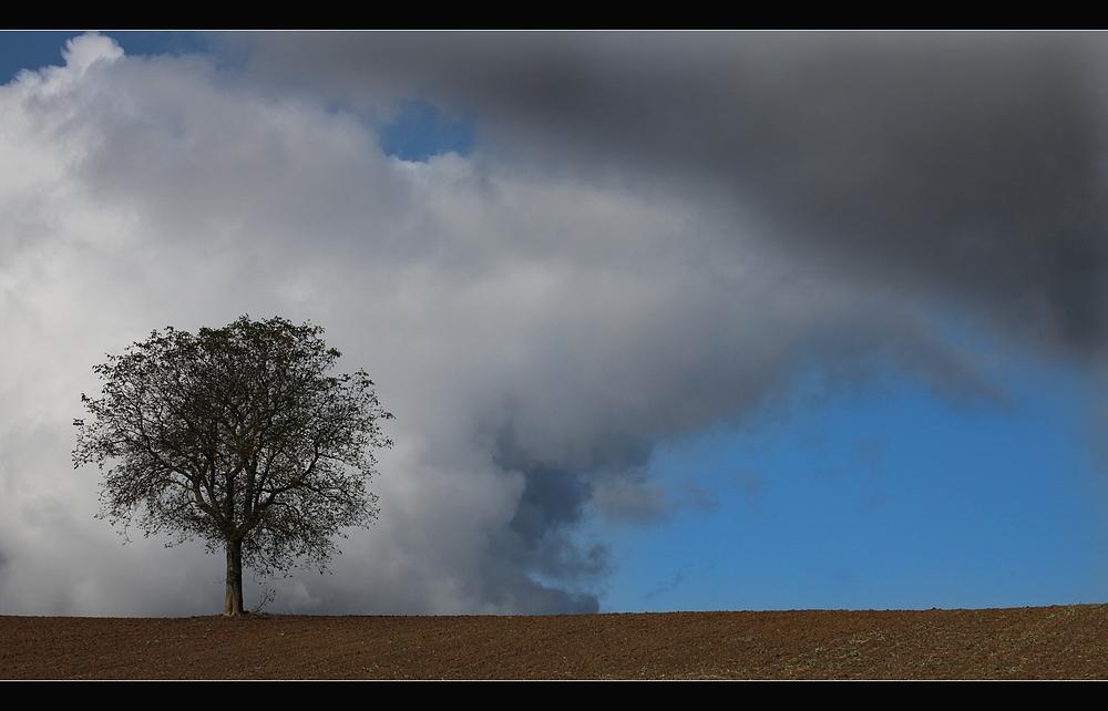 Nur ein Baum.......