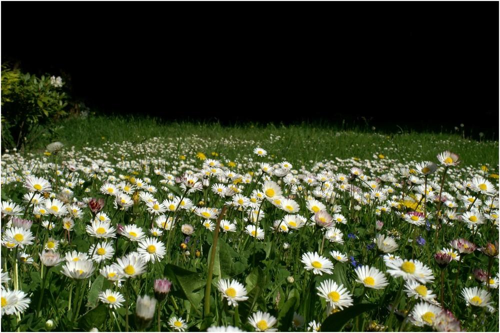 Nur ein Blumenstrauß wird ihr nicht gerecht...