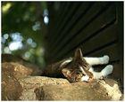 Nur ein doofes Katzenbild...