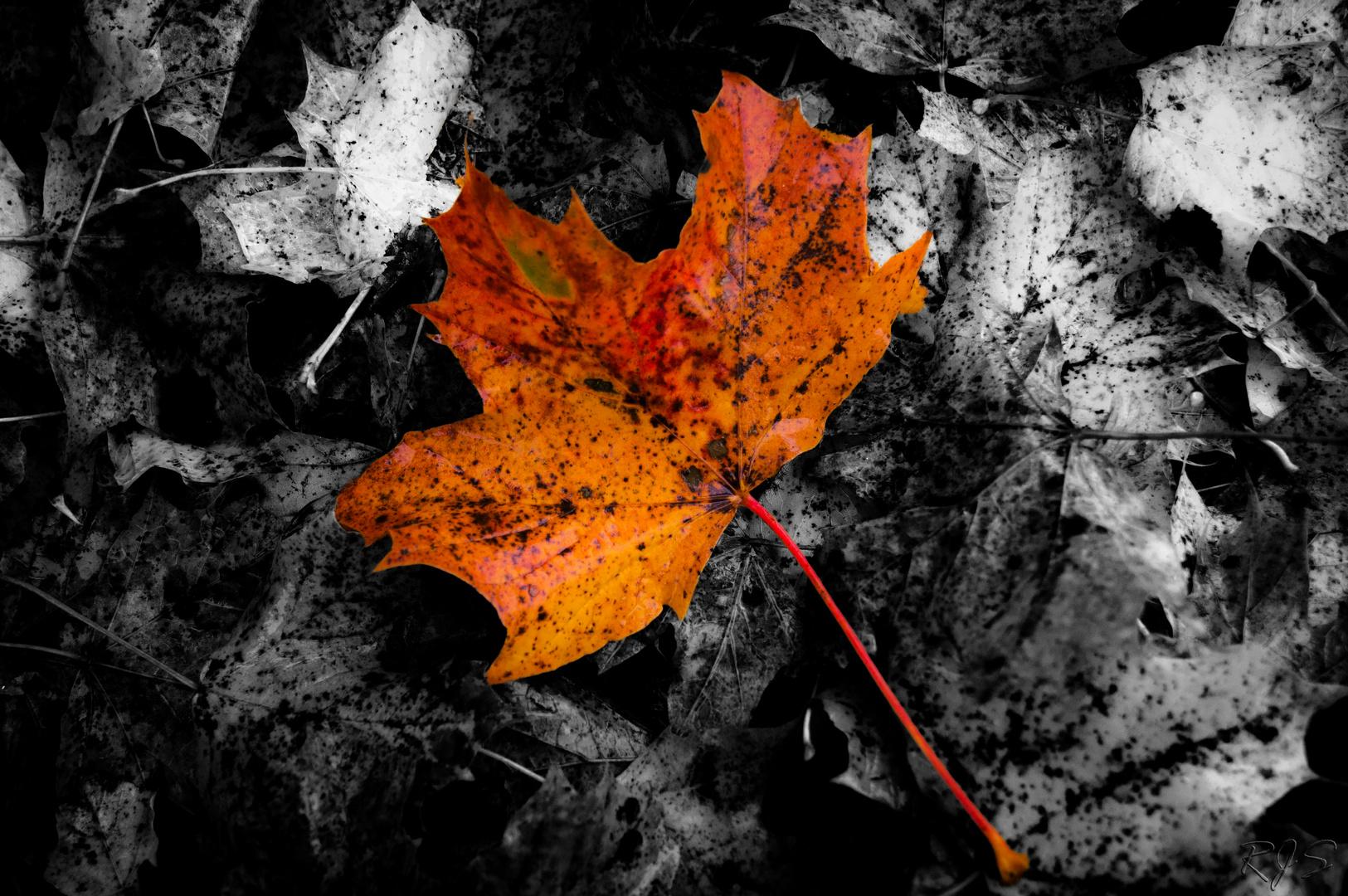 Nur ein Herbstgruß zwischendurch