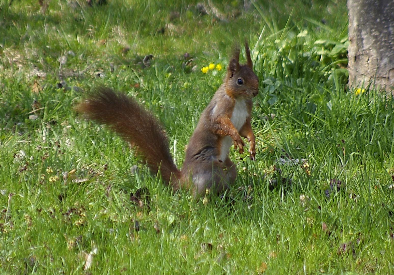 Nur ein Hörnchen, Osterhase war nicht in sicht