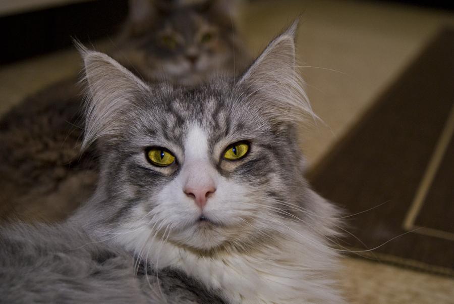 Nur ein Katzenbild
