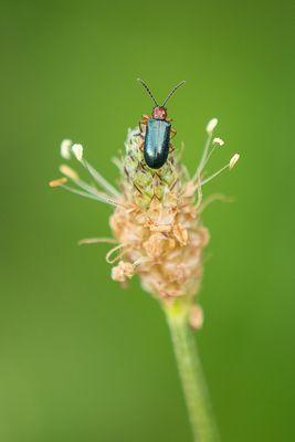 ...nur ein kleiner Käfer