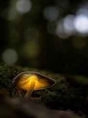 nur ein Pilz