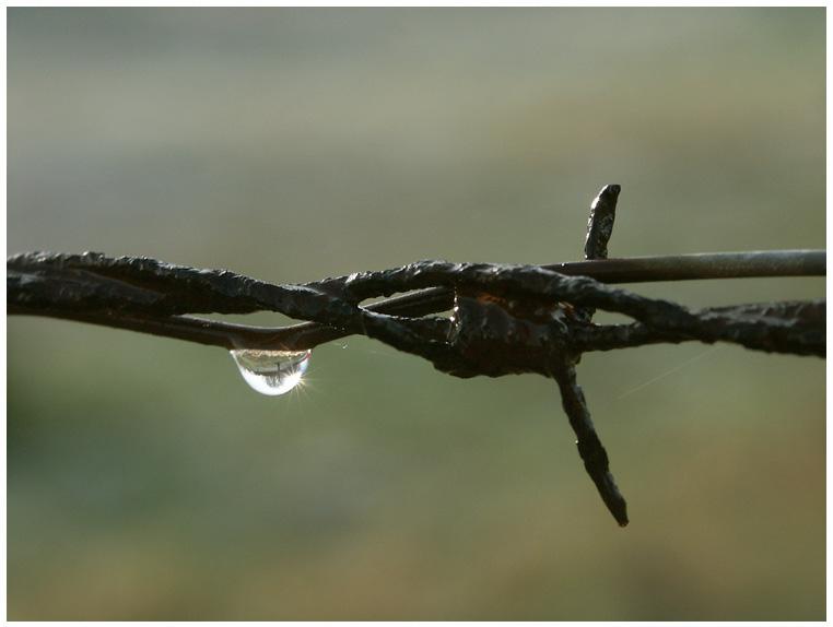 Nur ein Regentropfen