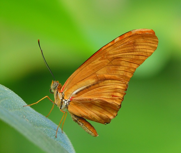 nur ein Schmetterling...