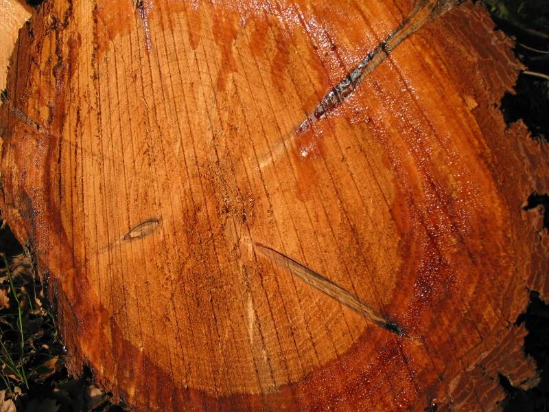 Nur ein Stück Holz