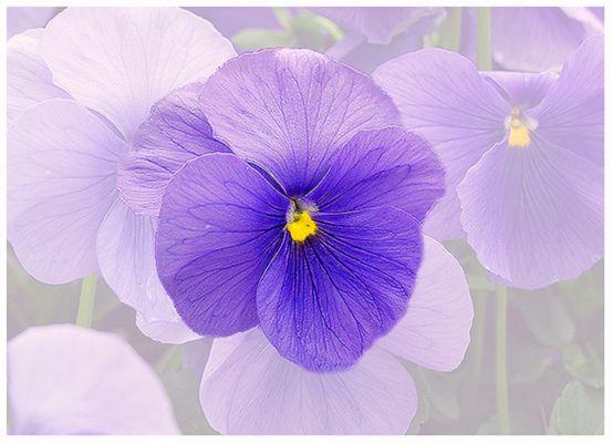 Nur eine Blüte?