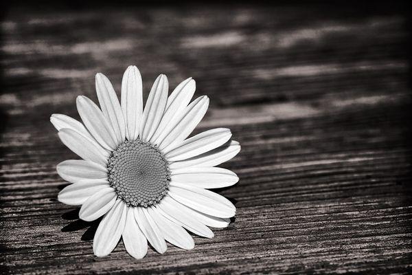 nur eine Blume
