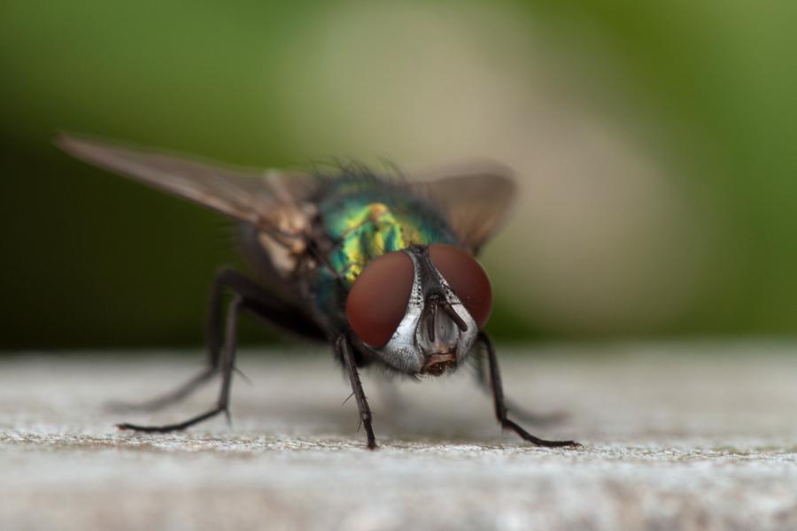 Nur eine Fliege 2