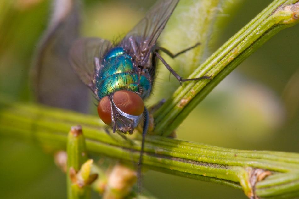 Nur eine Fliege.......