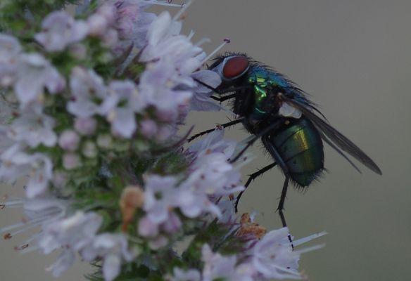 nur eine Fliege...