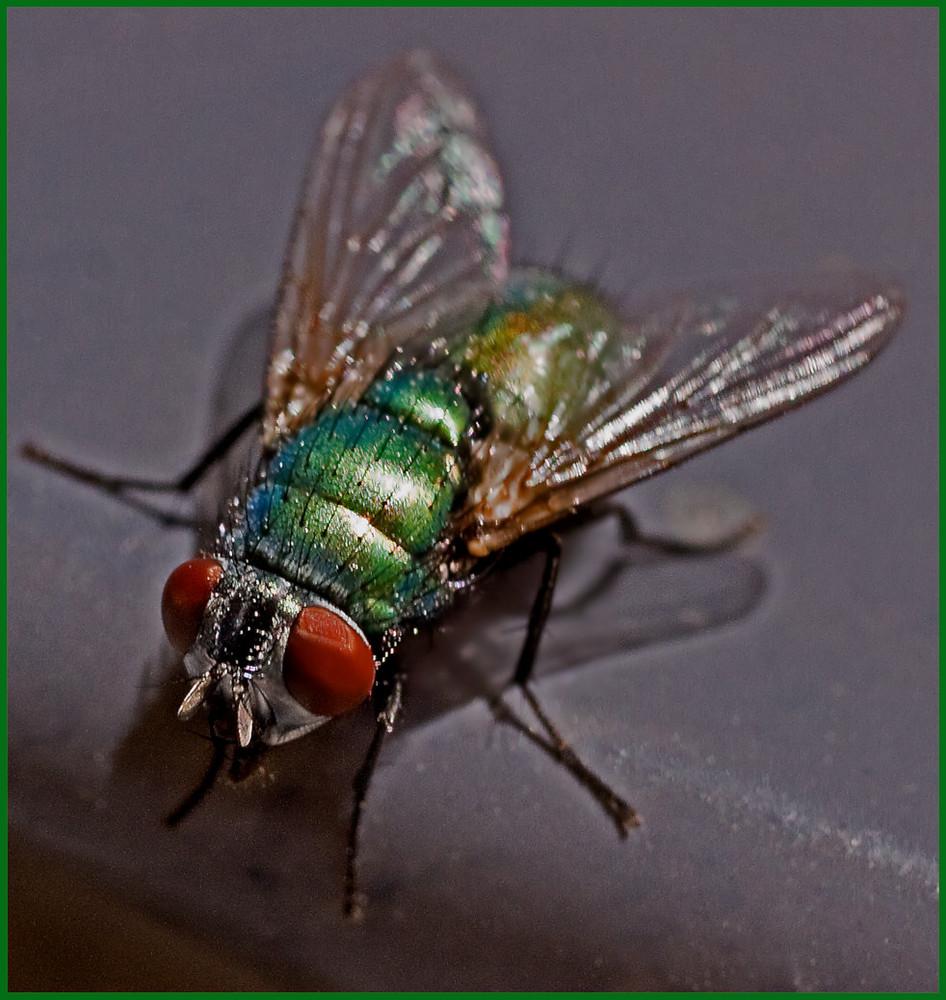 Nur eine Fliege