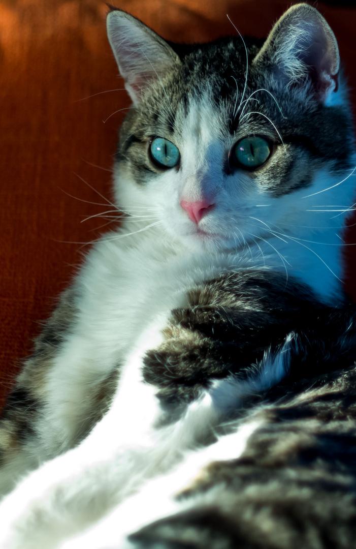 Nur eine Katze