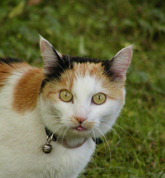 Nur eine Katze ...
