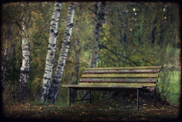 Nur eine Stunde im grünen Wald