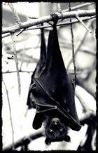 """Nur """"Fledermäuse"""" lassen sich hängen... =)"""