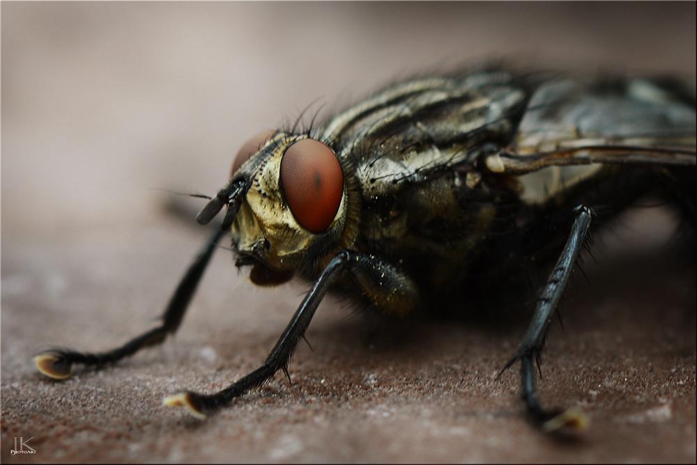 Nur Fliegen sind schöner!