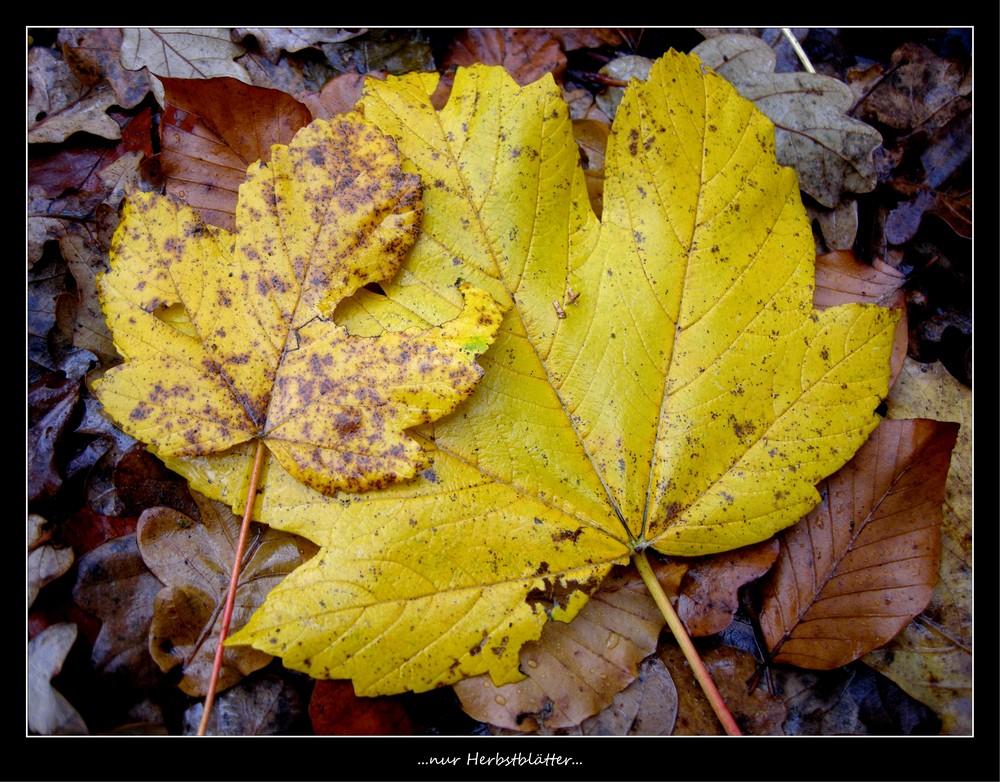 ...nur Herbstblätter...